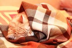 Cat Under Plaid fotos de stock royalty free
