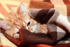 Cat Under Plaid foto de stock