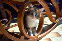 Cat under a rocking chair royalty free stock images