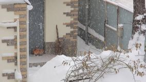 Cat Under The Snowfall metrajes