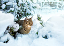 Cat under the snowy tree. Cat sitting under the snowy tree royalty free stock images