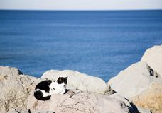 Cat Under The Sun Royalty Free Stock Photography