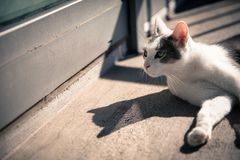 Cat Under the Sun. Cat enjoy the relaxing afternoon Stock Images