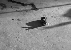 CAT UNDER SUNLIGHT LOOKING AT ITS SHADOW royalty free stock image