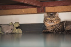 Cat Under The Bed Stock Image