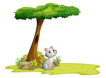 A cat under a tree Stock Photo