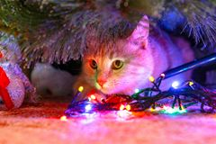 Cat meets New year and waiting for gifts. stock photos