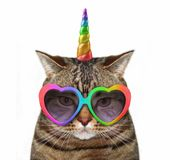 Cat unicorn in glasses