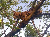 Cat up. Cat in tree Stock Images