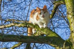 Cat up a tree Stock Photos