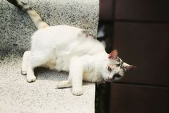 Cat upside down Royalty Free Stock Photos