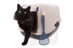 Cat using a closed litter box. Isolated on white background stock photos