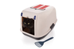 Cat using a closed litter box Stock Image