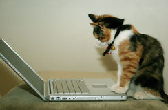 Cat using the computer