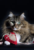 Cat with Valentine Heart Royalty Free Stock Photos