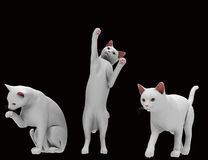 Cat in various positions. Stock Photos