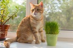Cat and vase of fresh catnip stock photography