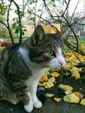 Cat Vaska, Odessa2017 Fotografie Stock Libere da Diritti