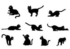 Cat Vector. Collection of Cat Vector. Cute Black Cat Illustration vector illustration