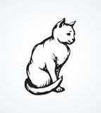 Cat. Vector Drawing Stock Image
