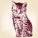 Cat  vector illustration Royalty Free Stock Photo