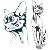 Cat vector Stock Photo
