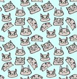 Cat vector pattern. Cat head seamless vector pattern Royalty Free Stock Image