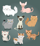 Cat vector set Royalty Free Stock Images
