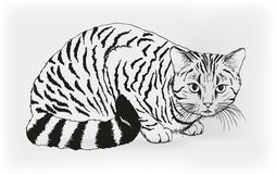 Cat. vector sketch Stock Images