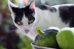 Cat in the vegetable garden Stock Images
