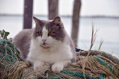 CAT IN VENEDIG SCHAUEN MICH lizenzfreies stockfoto