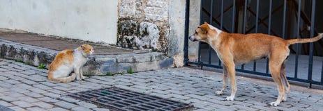 Cat Versus Dog Foto de Stock Royalty Free