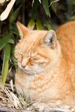 Funny red cat. Cat is very cute animal royalty free stock photography