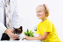 Cat at vet clinic Stock Image