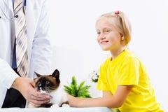 Cat at vet clinic Stock Image
