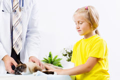 Cat at vet clinic Stock Photography