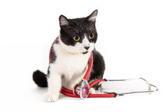 Cat vet doctor with a stethoscope. Black and white cat vet doctor with a stethoscope on a white background royalty free stock images