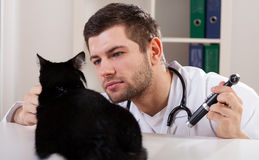 Cat at the vet. Purebred cat at the vet's office, horizontal stock photography