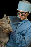 Cat and Veterinarian Stock Image
