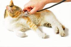 Cat veterinarian examination Royalty Free Stock Photography