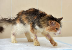 Cat Veterinarians. Cat being treated at veterinary hospitals Royalty Free Stock Photos