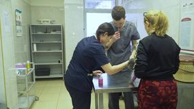 Cat in the veterinary clinic. Cat at a veterinarian on examination and medical procedures. Cat in the veterinary clinic on the medical examination table stock footage