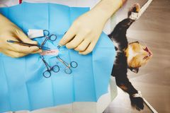 Cat in veterinary hospital Royalty Free Stock Photos