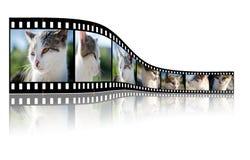 Cat, Video, Photo, Photographer Stock Image
