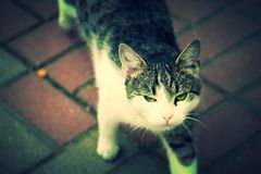 Cat. View cat walking on the tiles Royalty Free Stock Photos