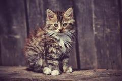Cat Village Royalty Free Stock Photo