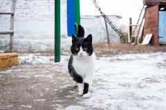 Cat village winter stock image