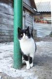 Cat village winter royalty free stock photo