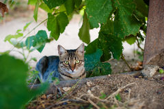 Cat in the vineyard Stock Image