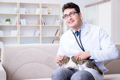 The cat visiting vet for regular check up Royalty Free Stock Photos